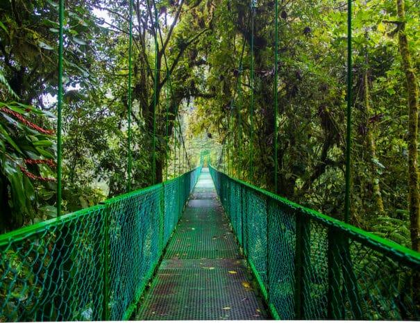 Monteverde___68