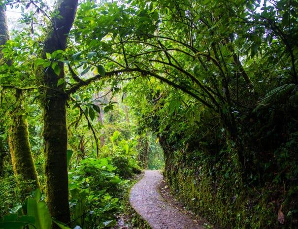 Monteverde___94_lg (1)