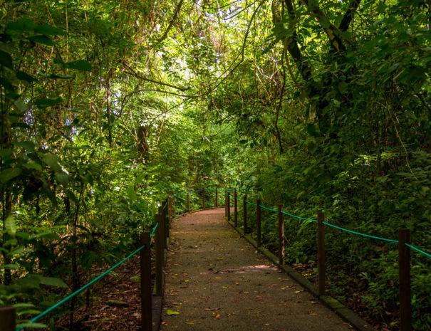 Parque-Nacional-Carara-32